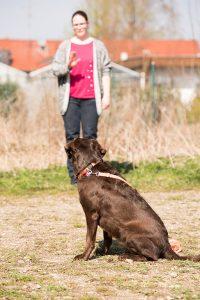 Hundeschule Gruppenkurse in München