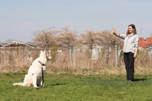 Hunde Aufbaukurs in München