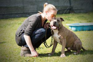 Beschäftigungskurs für Hunde in München