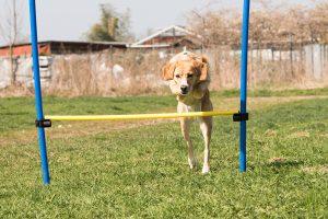 Agility Training für Hunde