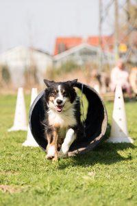 Hunde Agility Kurs in München!