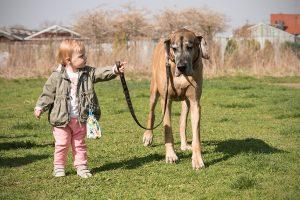 Hundeschule für Kinder in München
