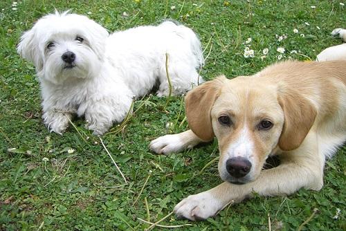 Hundespielstunde in München