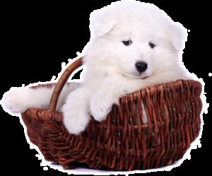 Hundekaufberatung