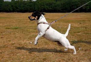 Leinen Intensiv Kurs Hund